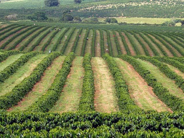 Brasile sudamerica info for Casa di piantagioni del sud